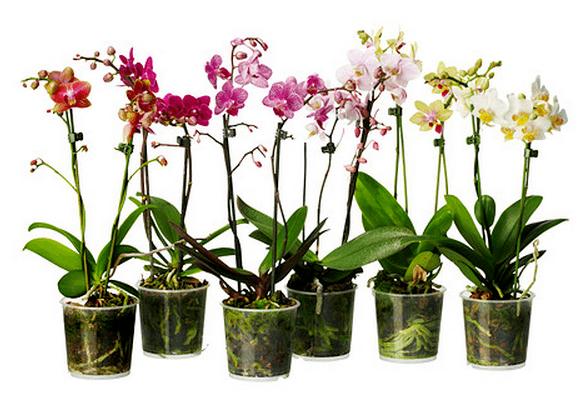 Plantas ikea - Plantas interior ikea ...